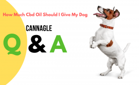 How Much Cbd Oil Should I Give My Dog