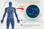 The anatomy of how CBD creates homeostasis In our body